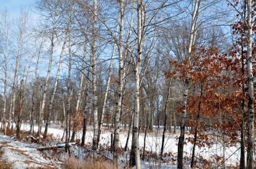 November DSC_7783